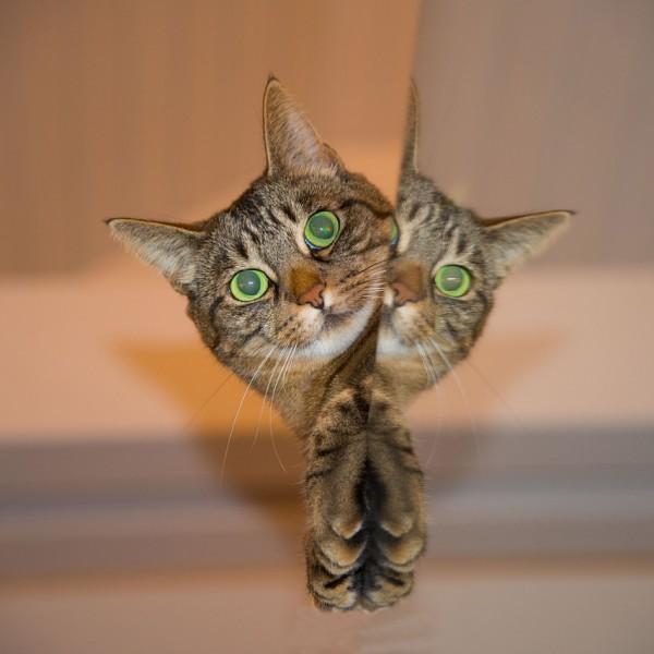 귀여운 고양이발 안마기 & 후레쉬